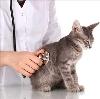 Ветеринарные клиники в Ярково